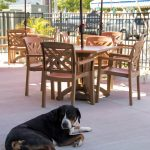 dog sits on ground outside at restaurant